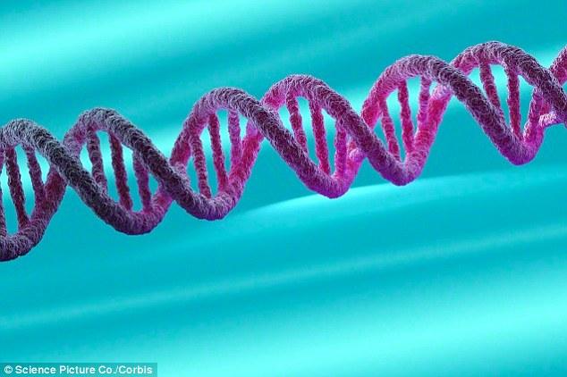 bdnf gene