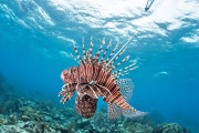 Researchers working on Killer Robots to save the Atlantic ecosystem