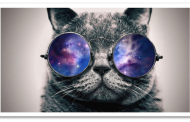 Ten Surprising Cat Facts 95% of People Don't Know!