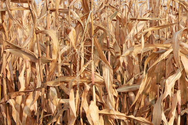 Is the well drying up for farmers?