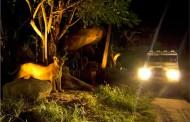 Two cities in Andhra Pradesh to get night safaris soon