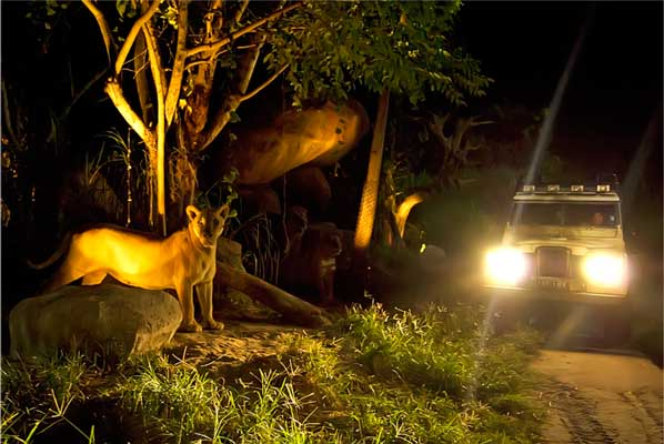 Two cities in Andhra Pradesh to get night safaris soon