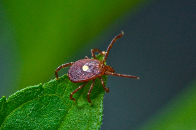 How to Overcome Lyme Disease and Continue Enjoying the Great Outdoors