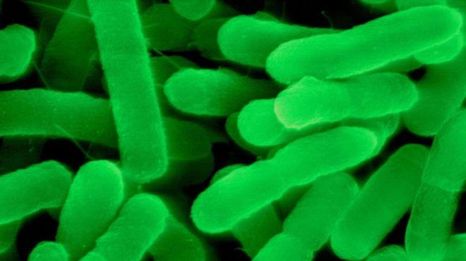 Bug Resists all Antibiotics