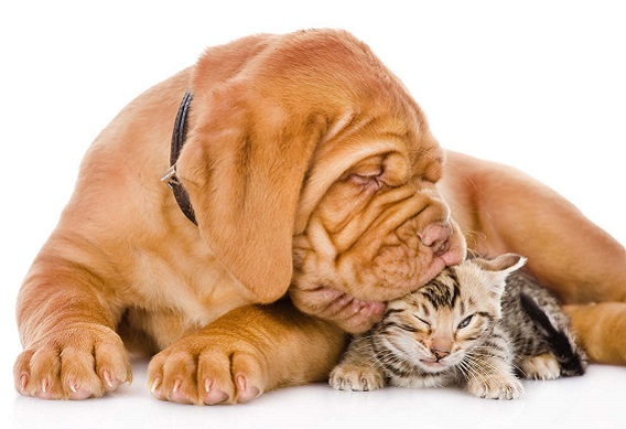 Cats and Dogs Memory: They both have a similar way of remembering things