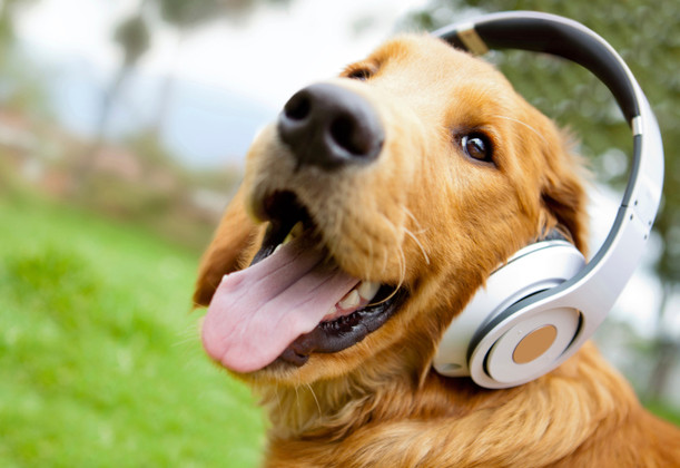 Most Dogs Love Reggae Music, Study Shows