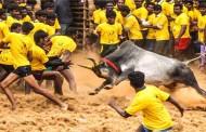 Supreme court refuses to stay Tamil Nadu's new law allowing Jallikattu