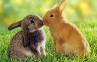 10 Cutest Animals in the World