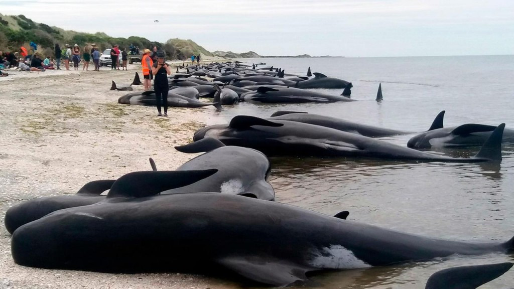 Whales Stranded