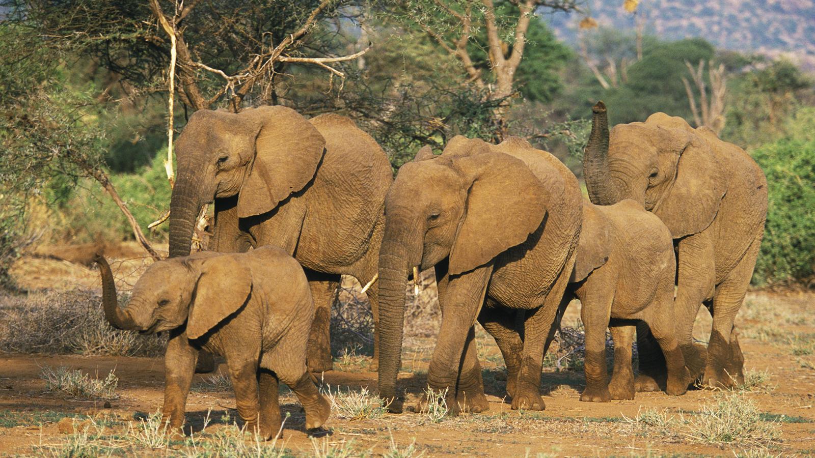 Films sexuels sur les éléphants