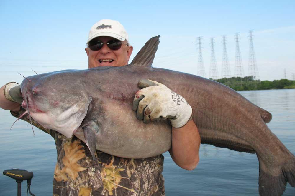biggest catfish in the world - Blue Catfish